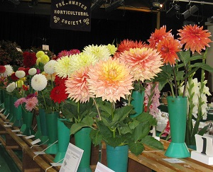 horti pictures
